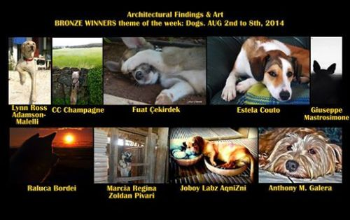 Bronze Winner, Architectural Findings & Art, theme dogs 2-8 August.